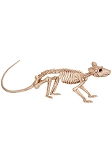Skeleton Rat Prop