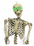 Light-Up Skeleton Prop