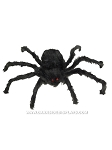 Posable Black Spider