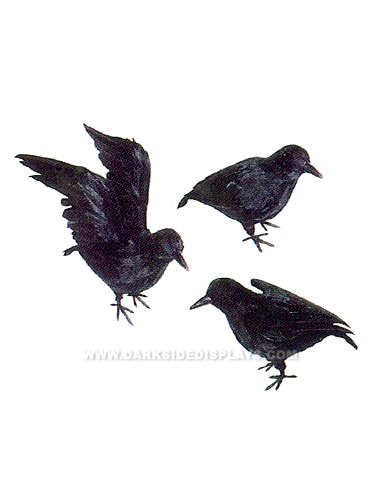 Small Feathered Crows Set