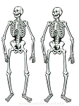 Jointed Skeleton Twins Cut-Outs