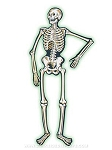 Jointed Nite-Glo Skeleton Cut-Out - 55 in
