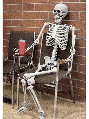 5 Ft Posable Skeleton