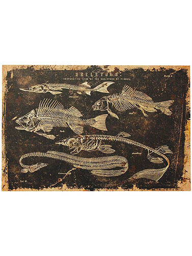 Fish Skeletons Canvas Wall Art