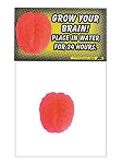 Growing Brain Toy
