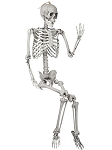 5 Ft Posable Skeleton