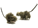 Furry Rats - Set of 2
