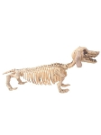 Skeleton Dachshund Dog
