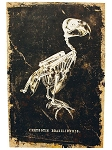 Skeleton Bird Canvas Wall Art
