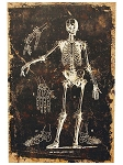 Skeleton Bone Chart Canvas Wall Art
