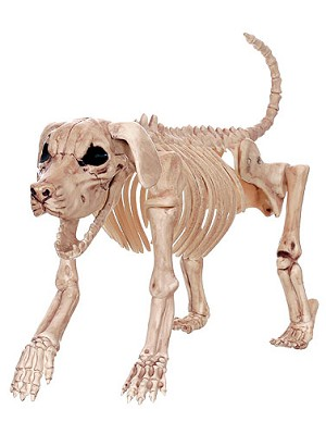Beagle Bonez Skeleton Dog Prop