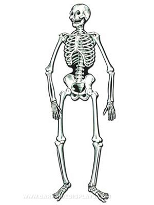 Life size jointed skeleton cut out decoration for Skeleton template to cut out